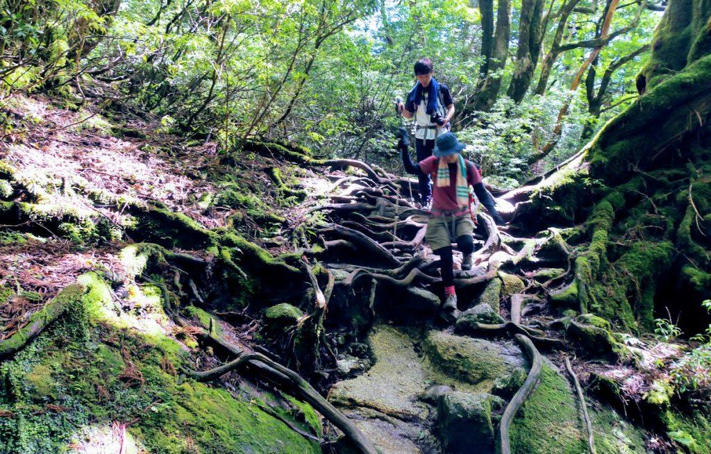 縄文杉周辺の世界遺産エリアの森